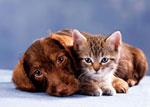 В Киеве открылся ЗАГС для кошек и собак