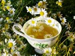Чай з ромашкою має протиракові властивості
