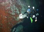 В околицях Багамських островів виявлено невідомі науці форми життя