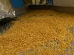 В Індонезії вчені винайшли штучний замінник рису