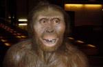 Обнаружен новый древнейший предок человека