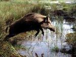 В Украине открывается сезон охоты