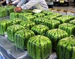 На рынках Европы появятся квадратные арбузы